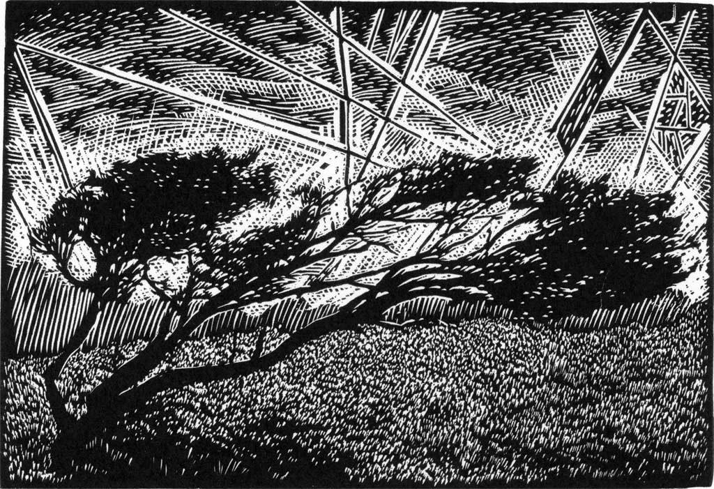 Windy Tree Gower Peninsula - wood engraving