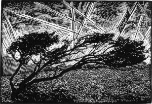 Windy Tree Gower Peninsula - wood engraving